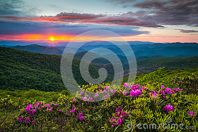 North Carolina Blue Ridge Parkway Spring Flowers Scenic Mountain Stock Photo