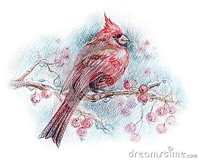 Northern cardinal bird drawing