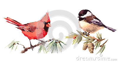 Northern Cardinal and Chickadee Birds Watercolor Illustration Set Hand Drawn Cartoon Illustration