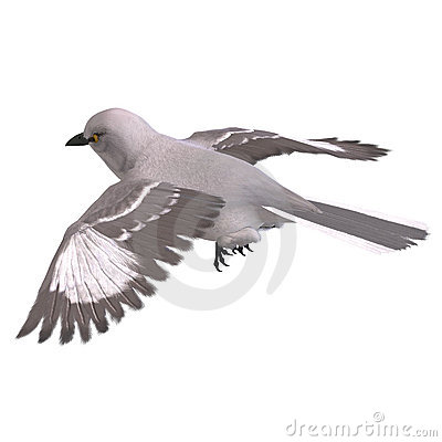 Northern Mockingbird. 3D rendering with clipping
