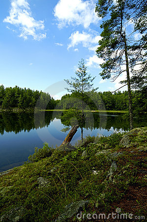 Free Northern Wild Stock Photos - 108773