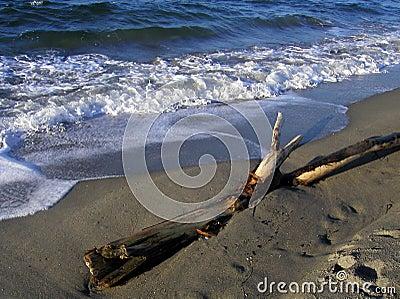 Northwest strand