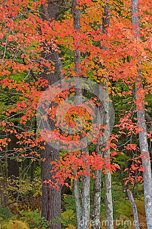 Free Northwoods Autumn Royalty Free Stock Photography - 34630587