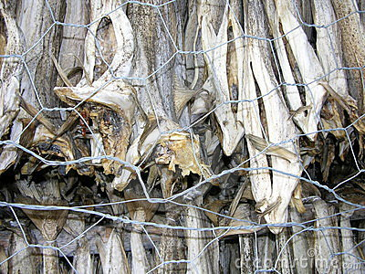 Norway, dried fish Lutefisk