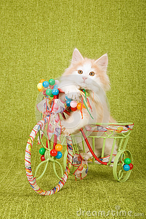 Free Norwegian Forest Cat Kitten Sitting Inside Decorated Tricycle Cart Stock Photo - 44736890