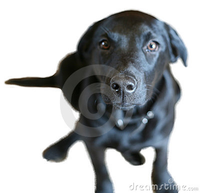 Nosey Dog