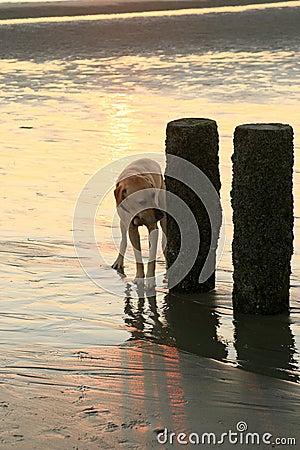 Nosing dog during sunset