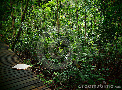 Note Book on rainforest trail
