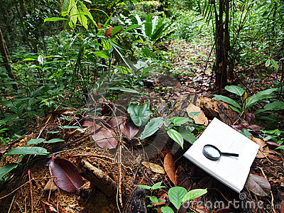 Notebook, tropical rainforest background