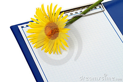 Notebook and yellow daisy