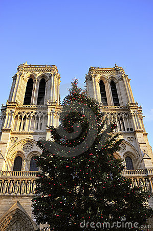 Notre Dame Cathedral, Christmas Tree