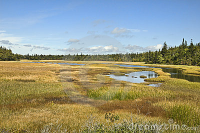 Nova Scotia Marsh