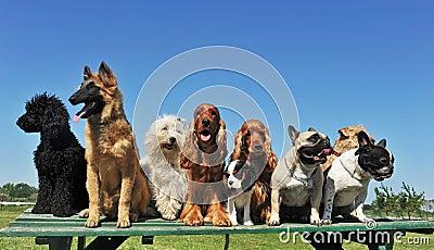Nove cães