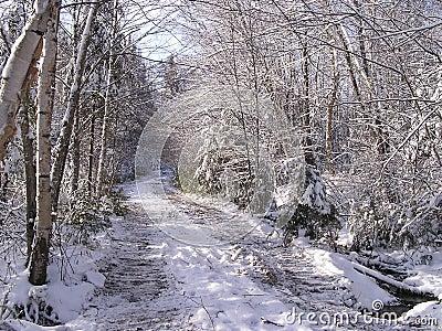November snow falls