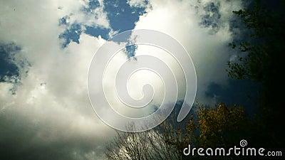 Nubes del lapso de tiempo sobre árbol almacen de metraje de vídeo