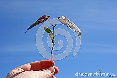 Nuovo albero & un nuovo inizio