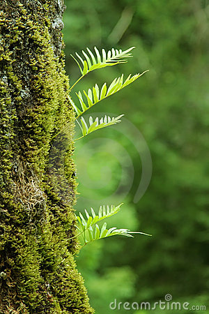 Free Nurseling Fern Leaves Royalty Free Stock Photography - 3621487