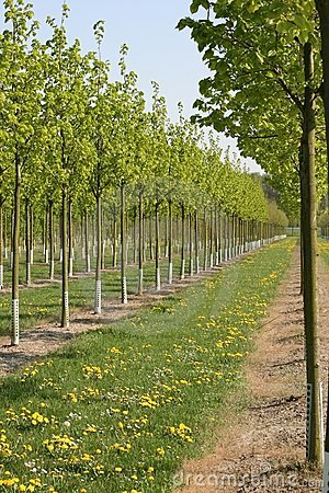 Nursery Trees in the Spring Time