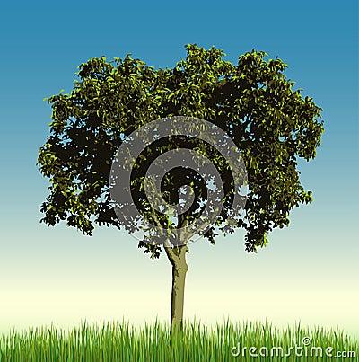 Nut tree in grass