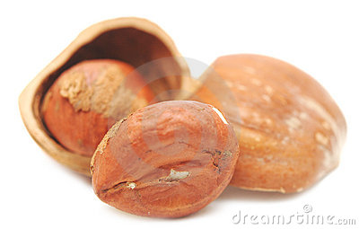 Nuts a filbert  in a shell