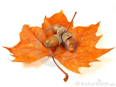 Nuts on a leaf (isolated)