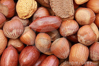 Nuts in Shells 2