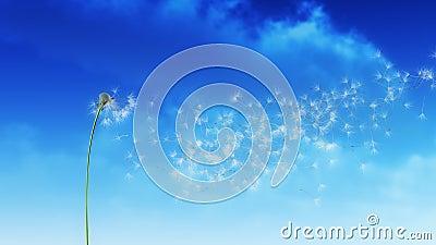 Nuvens do dente-de-leão