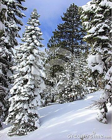 Ny snow