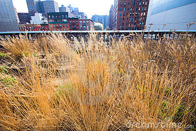 NYC High Line Park Editorial Stock Photo