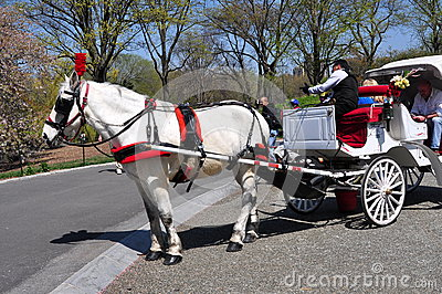 NYC: Horse Carriage in Central Park Editorial Photography