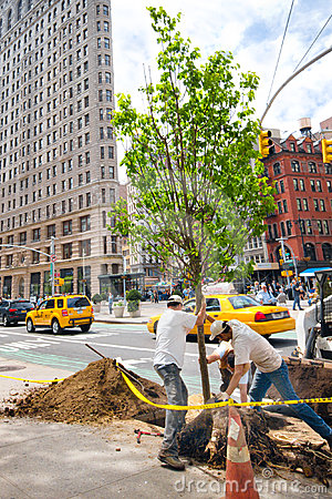 NYC Tree Planting Editorial Photography