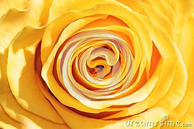 O amarelo levantou-se