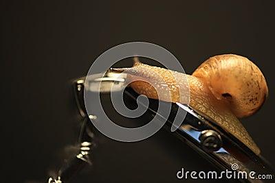 O caracol rasteja no relógio