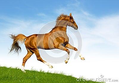 O cavalo da castanha galopa em um monte verde
