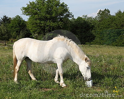 O cavalo que come o sal lambe