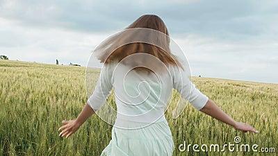 O close-up das mãos da mulher que correm através do campo de trigo, steadicam disparou Movimento lento Menina que toca nos spikel video estoque
