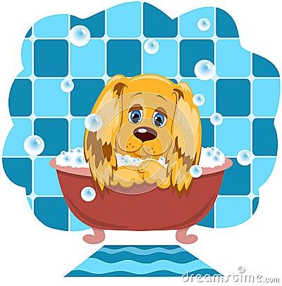 O cão banha-se.