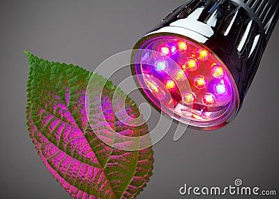O diodo emissor de luz cresce a luz