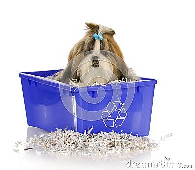 O filhote de cachorro recicl dentro o escaninho