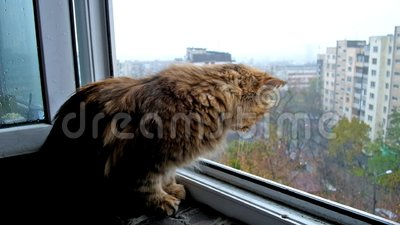 O gato curioso vídeos de arquivo