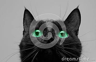 O gato preto olha acima