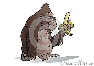 O gorila da Prata-para trás come a banana