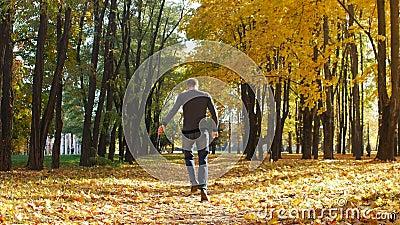 O indivíduo corre ao longo de uma aleia da árvore no parque da cidade As folhas de bordo amarelas caem no outono no dia ensolarad video estoque