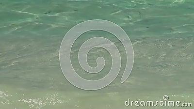 O mar acena a ressaca no Sandy Beach maldives Fim acima video estoque