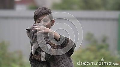 O menino engraçado segura um gato britânico em braços e lhe dá um golpe ao ar livre filme