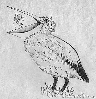 Pelicano e peixes