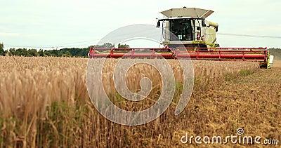 O tema é agricultura Uma ceifeira de liga moderna em The Field executa a grão que colhe em Sunny Day Against A filme
