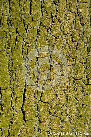 Free Oak Bark Stock Images - 7537994