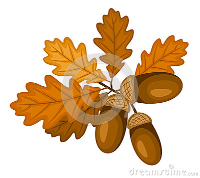 Oak branch with leaves and acorns. Vector illustra