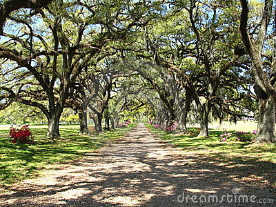 Oak Drive